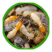 白蟻簡介防治