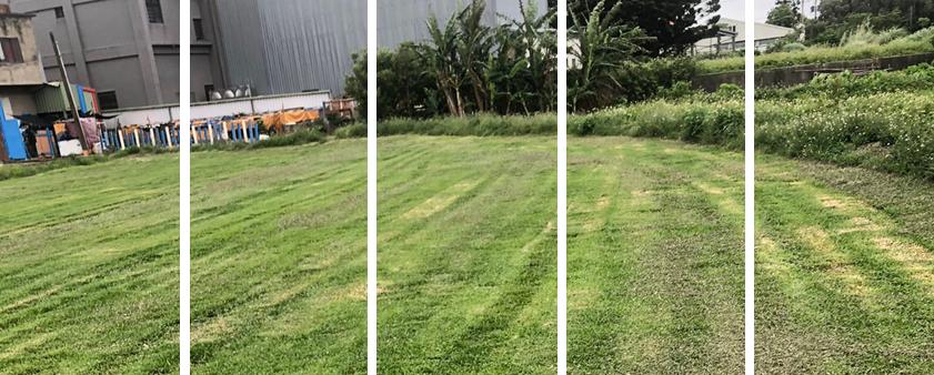 長青園藝苗圃專業草皮